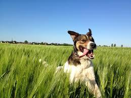 Kutya biztosítás
