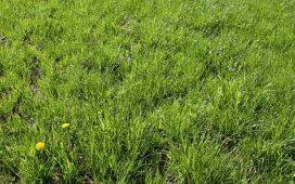 legelő keverék